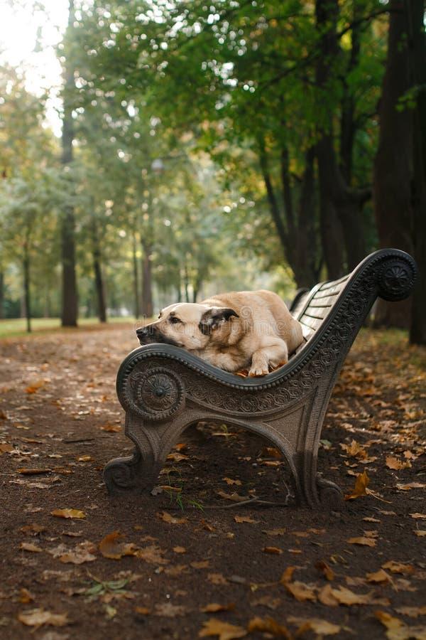 Μικτό σκυλί φυλής στο πάρκο φθινοπώρου στοκ φωτογραφία