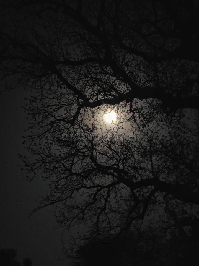 Μιλώντας φεγγάρι στοκ φωτογραφίες