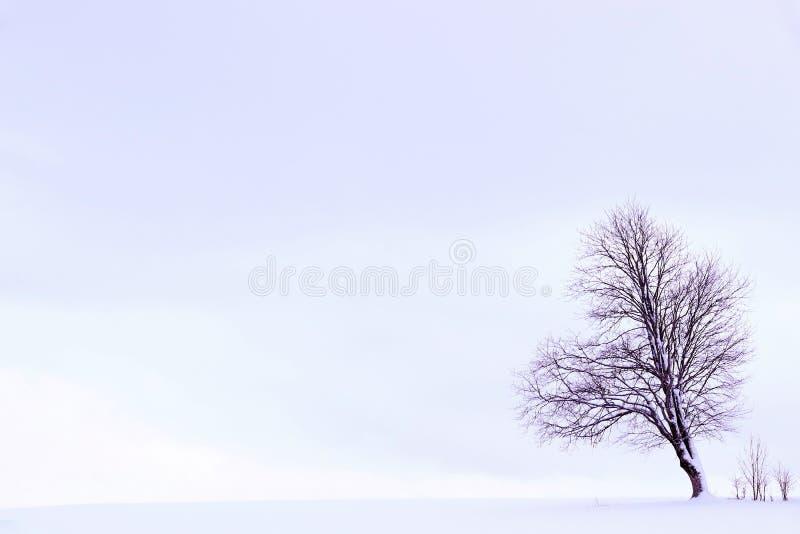 Μινιμαλιστικό χειμερινό τοπίο με ένα δέντρο σε έναν χιονισμένο τομέα στη βιολέτα στοκ εικόνες
