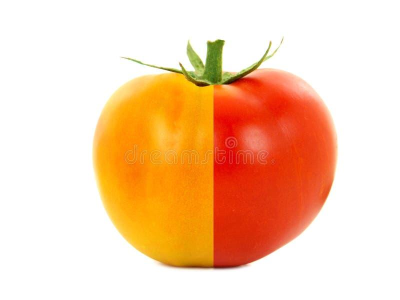 Μισή ώριμη και μισή unripe ντομάτα στοκ φωτογραφία με δικαίωμα ελεύθερης χρήσης