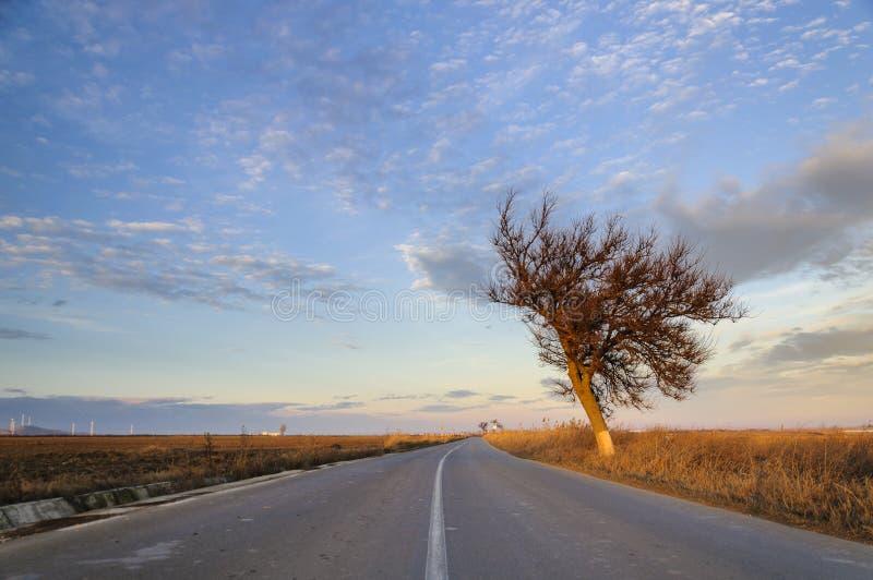 Μισό δέντρο στοκ εικόνες