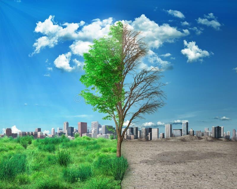 Μισό ζωντανό και κατά το ήμισυ νεκρό sta δέντρων στοκ εικόνες με δικαίωμα ελεύθερης χρήσης