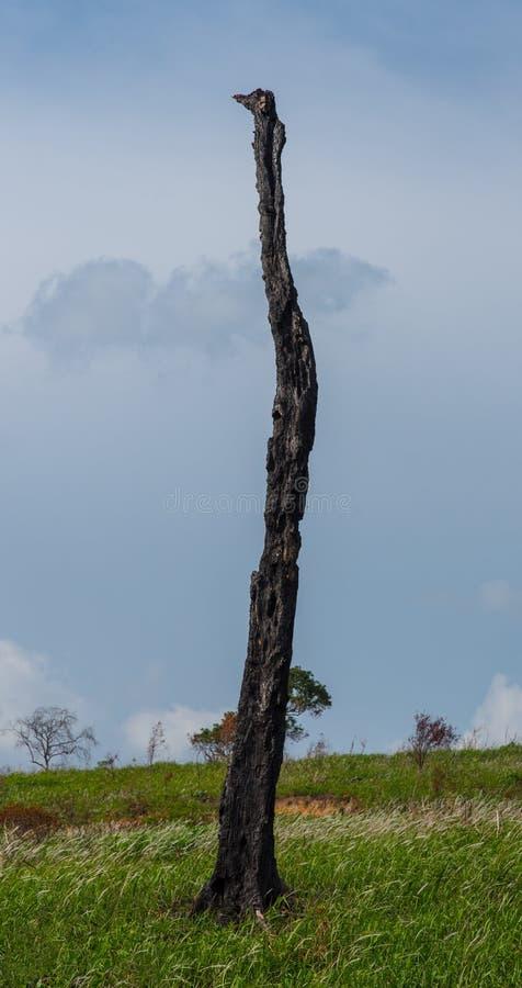 μμένα δέντρα στοκ εικόνες