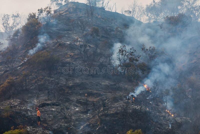 Μμένη επιφάνεια της γης μετά από μια δασική πυρκαγιά στοκ φωτογραφία με δικαίωμα ελεύθερης χρήσης