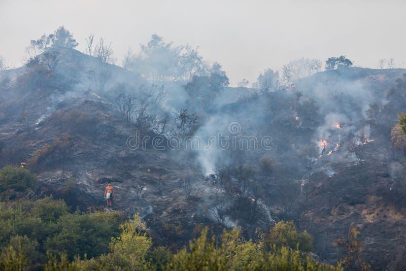 Μμένη επιφάνεια της γης μετά από μια δασική πυρκαγιά στοκ εικόνα