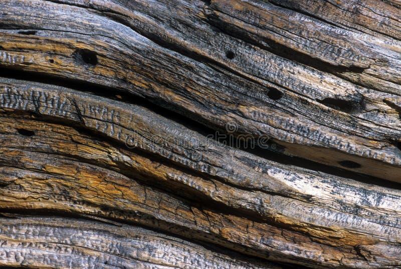 Μμένη Woodgrain λεπτομέρεια στοκ φωτογραφίες
