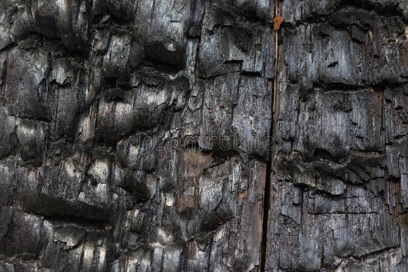 Μμένο δέντρο στοκ εικόνες