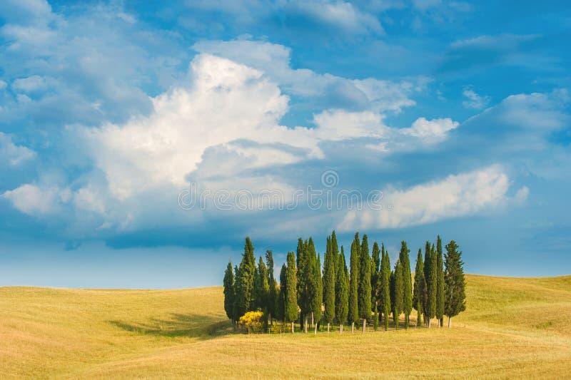 Μνήμες κυπαρισσιών των διακοπών στην Τοσκάνη, Ιταλία στοκ εικόνα με δικαίωμα ελεύθερης χρήσης