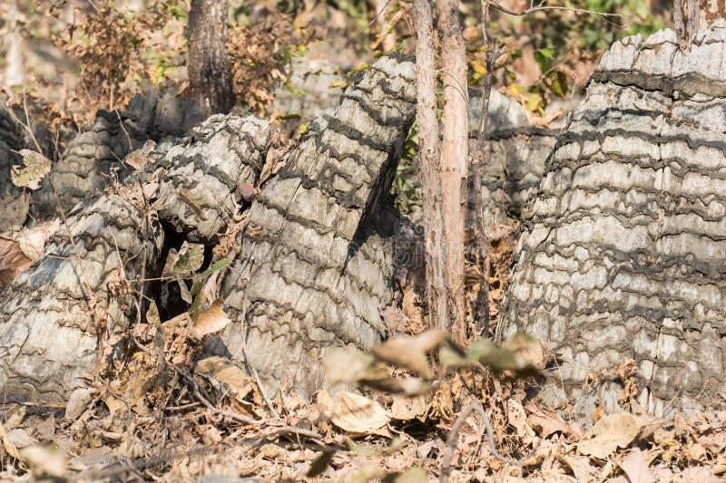 Μοναδικός σχηματισμός βράχου στην κεντρική Ινδία στοκ φωτογραφία