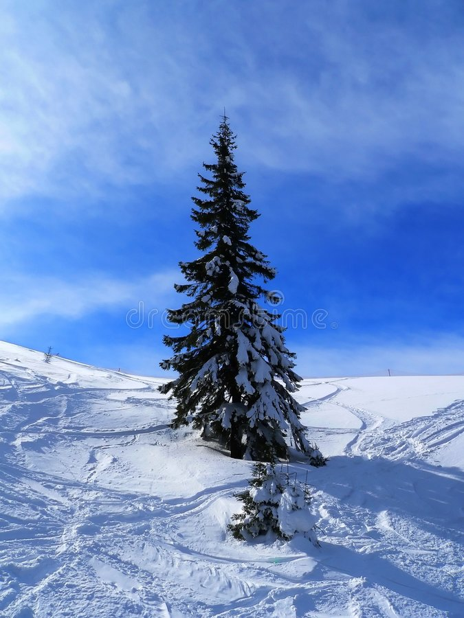 Download μοναχικός έλατου στοκ εικόνα. εικόνα από χιόνι, χειμώνας - 1528805