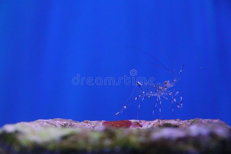 Μοναχικός πλανήτης, θαλάσσιος οργανισμός στοκ εικόνα