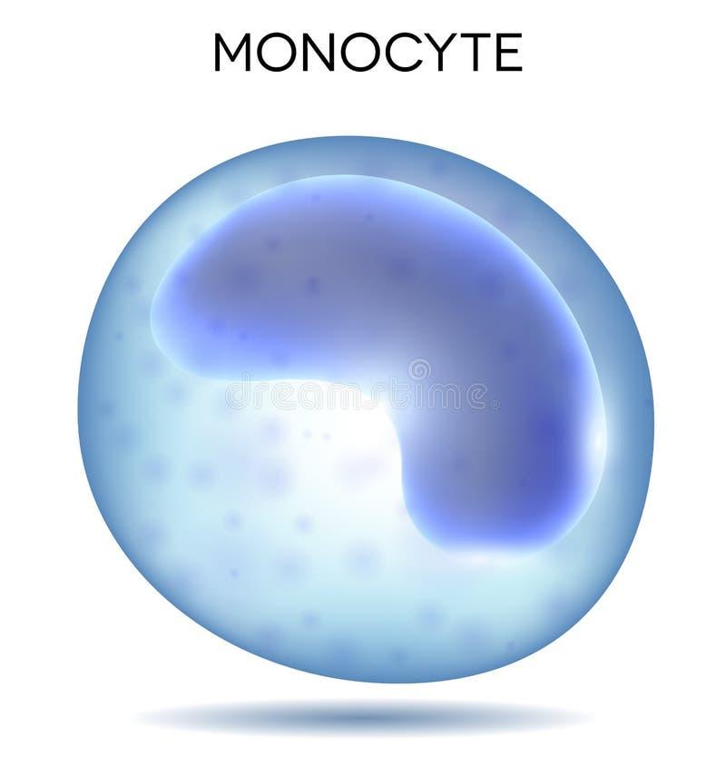Μονοκύτταρο κυττάρων αίματος ελεύθερη απεικόνιση δικαιώματος