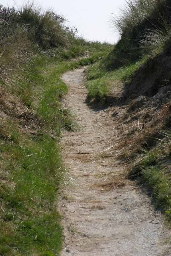 Download μονοπάτι αμμόλοφων στοκ εικόνα. εικόνα από φυτά, ολλανδία - 125185