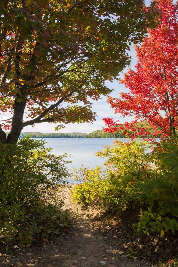 μονοπάτι λιμνών στοκ φωτογραφία με δικαίωμα ελεύθερης χρήσης