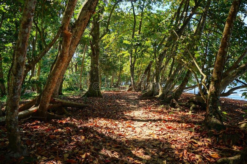 Μονοπάτι κάτω από τα δέντρα κατά μήκος της ακτής της Κόστα Ρίκα στοκ φωτογραφίες με δικαίωμα ελεύθερης χρήσης