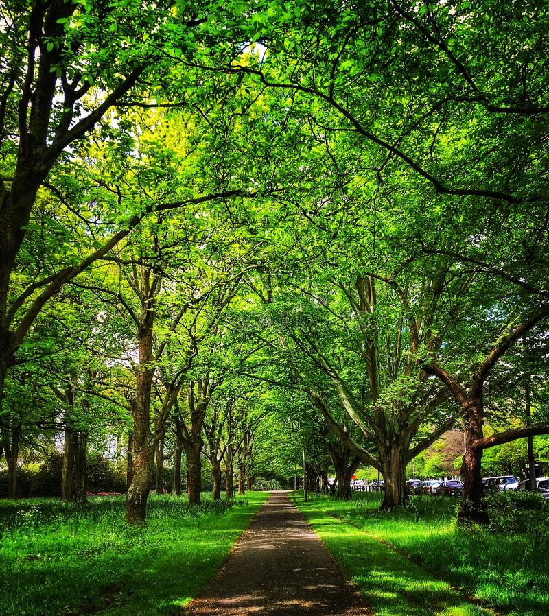 μονοπάτι κήπων στοκ φωτογραφίες με δικαίωμα ελεύθερης χρήσης