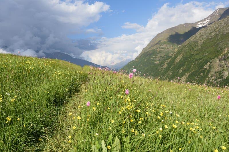 Μονοπάτι μέσω των αλπικών λιβαδιών βουνών στοκ φωτογραφία με δικαίωμα ελεύθερης χρήσης