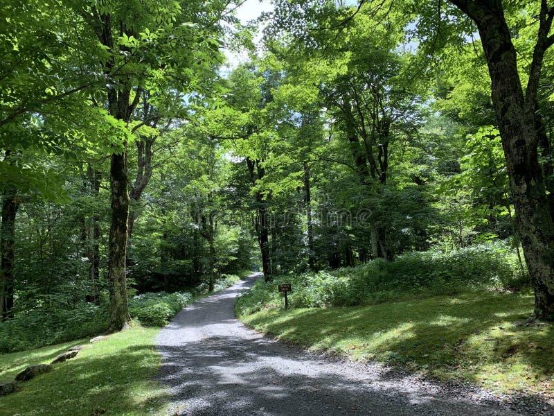 Μονοπάτι πεζοπορίας στο πάρκο Grandfather Mountain State Park Στα Δάση της Βόρειας Καρολίνας στοκ φωτογραφία με δικαίωμα ελεύθερης χρήσης