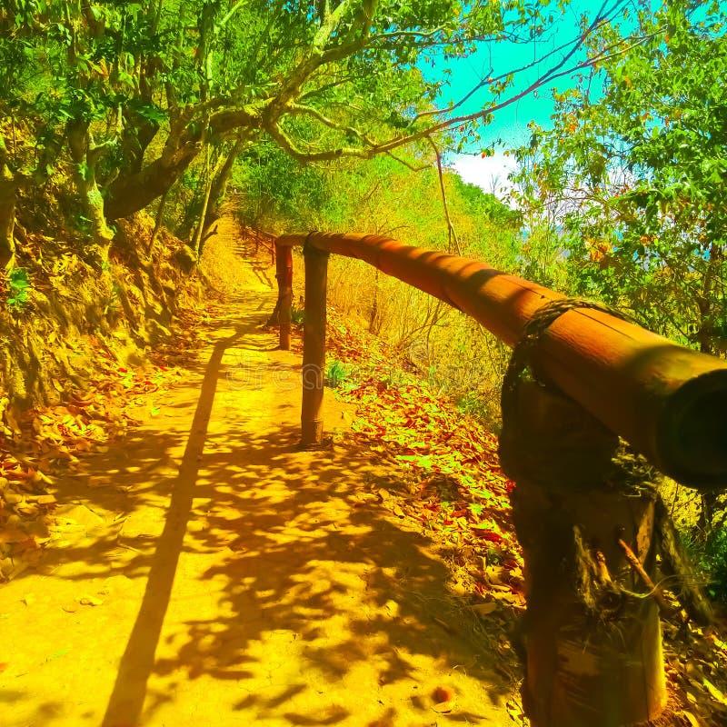 """Μονοπάτι προς Ï""""Î¿ δάσος Ένα μονοπάτι πεζοδρομίου προς Ï""""Î¿ δάσος, μπαμπού, στοκ φωτογραφίες με δικαίωμα ελεύθερης χρήσης"""
