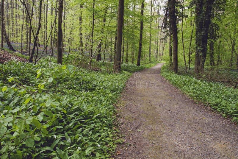 Μονοπάτι σε μια πράσινη δασώδη περιοχή άνοιξης μεταξύ των άγριων λουλουδιών στοκ εικόνα
