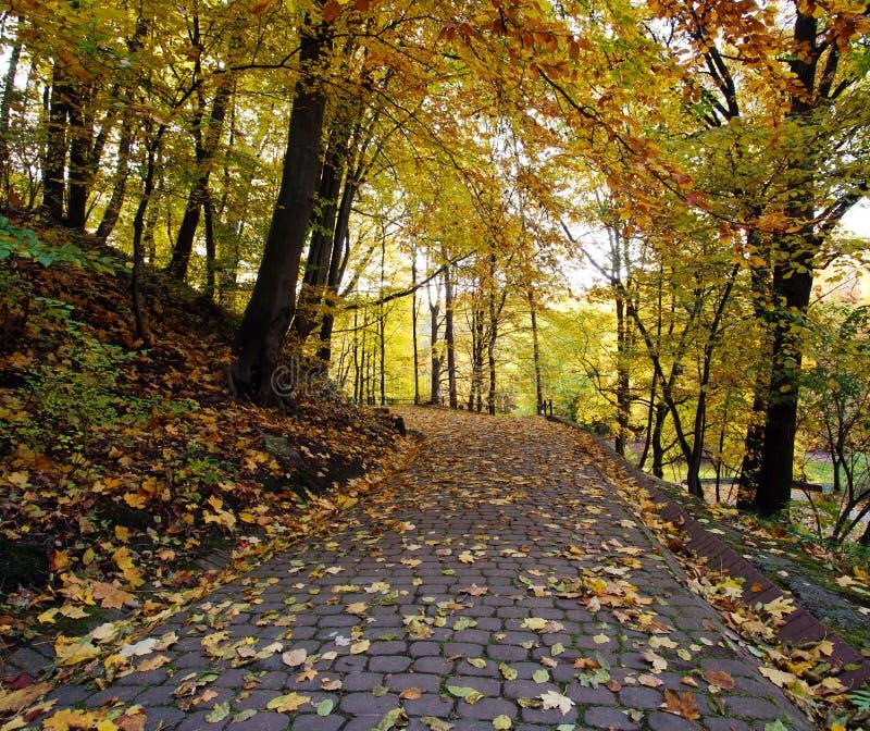 Μονοπάτι στο πάρκο πόλεων φθινοπώρου με τα κίτρινα πεσμένα φύλλα στοκ εικόνες με δικαίωμα ελεύθερης χρήσης