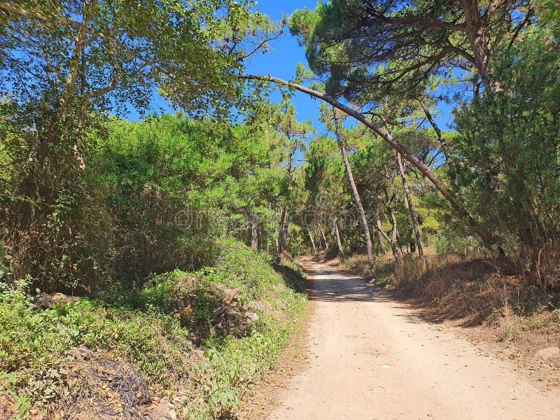 Μονοπάτι στο πράσινο δάσος στοκ εικόνες