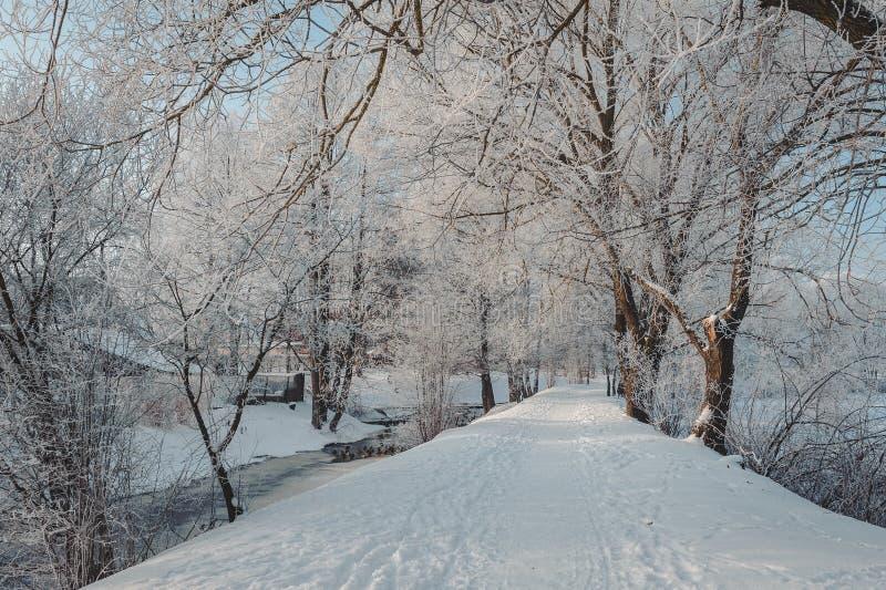 Μονοπάτι στο χειμερινό πάρκο Δέντρα που καλύπτονται χειμερινά με τον παγετό στοκ φωτογραφία