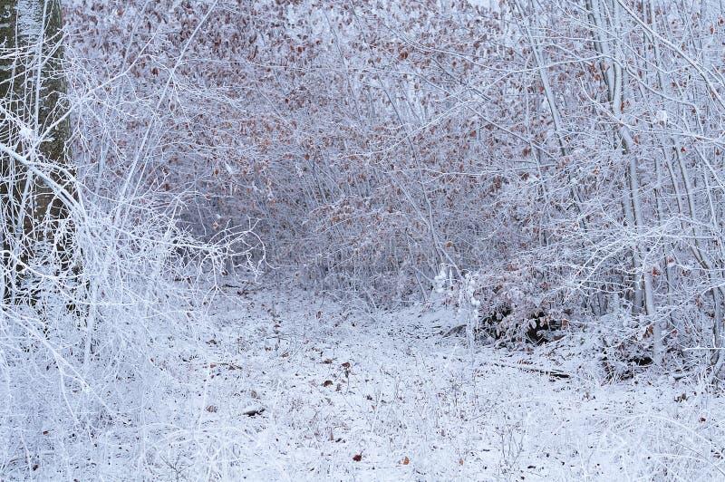 Μονοπάτι του δάσους που καλύπτεται μέσω με τον παγετό στοκ εικόνα