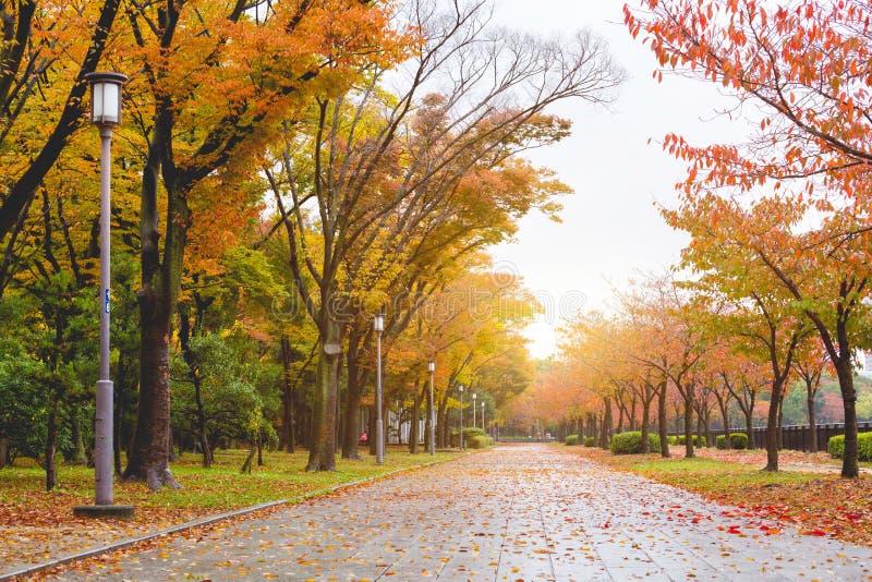 Μονοπάτι το φθινόπωρο στοκ φωτογραφίες