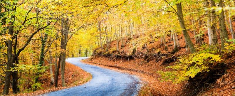 Μονοπάτι φθινοπώρου στα δάση στοκ εικόνα