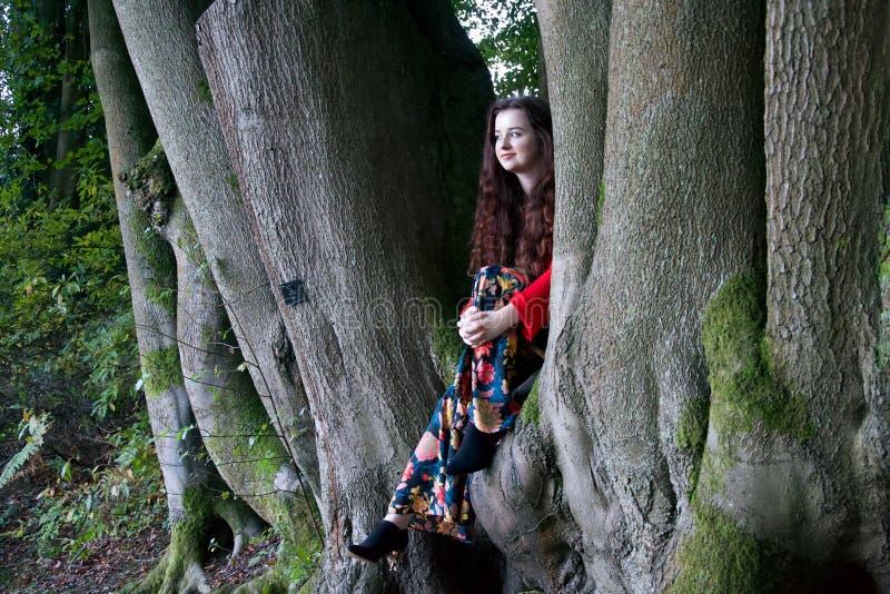 Μοντέρνη γυναικεία συνεδρίαση σε ένα δέντρο οξιών στοκ φωτογραφία με δικαίωμα ελεύθερης χρήσης
