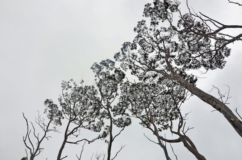 Μορφές στο θόλο δέντρων στοκ εικόνες με δικαίωμα ελεύθερης χρήσης