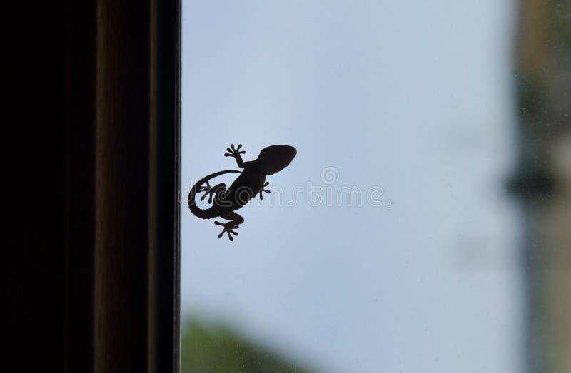 Μορφή ενός μικρού gecko στοκ φωτογραφίες