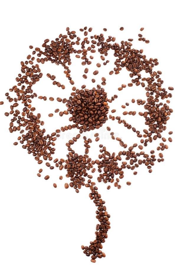 Μορφή πικραλίδων φιαγμένη από φασόλια καφέ πέρα από το άσπρο υπόβαθρο στοκ φωτογραφία με δικαίωμα ελεύθερης χρήσης