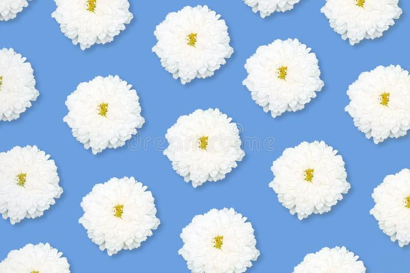 Μοτίβο λευκού λουλουδιού σε μπλε φόντο στοκ φωτογραφία με δικαίωμα ελεύθερης χρήσης