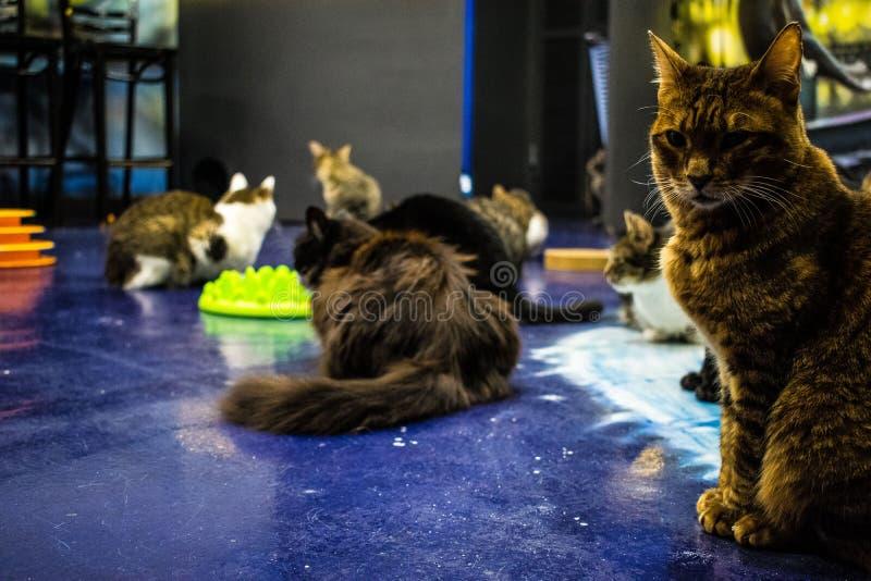Μουσείο γατών στοκ εικόνα με δικαίωμα ελεύθερης χρήσης