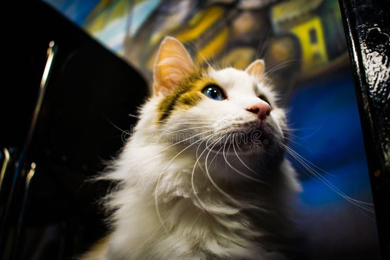 Μουσείο γατών στοκ εικόνα