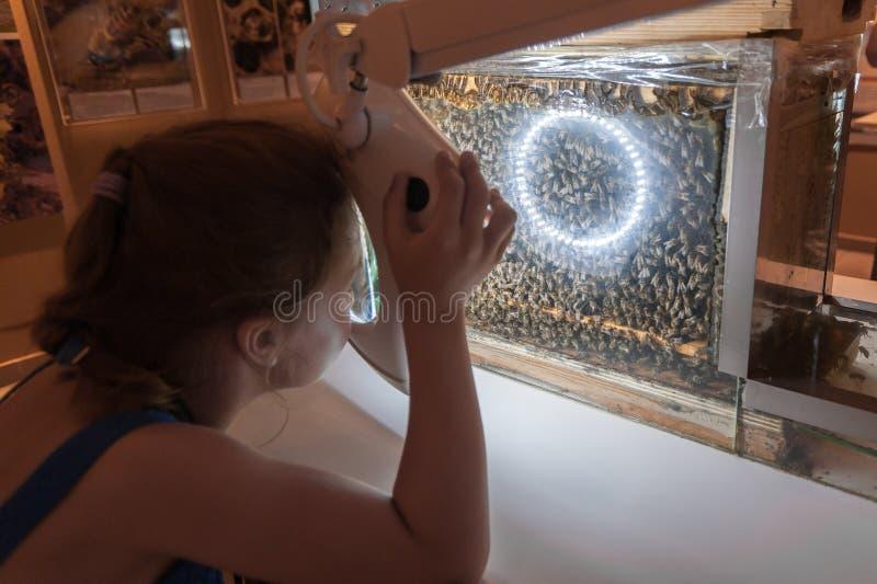 Μουσείο μελισσών στο χωριό Pastida Ελλάδα 30/05/2018 6 χρονών το κορίτσι μαθαίνει για τη μυστική ζωή των μελισσών μέσω της ενίσχυ στοκ φωτογραφίες