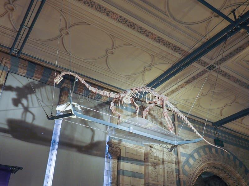 μουσείο του Λονδίνου ιστορίας φυσικό στοκ φωτογραφίες