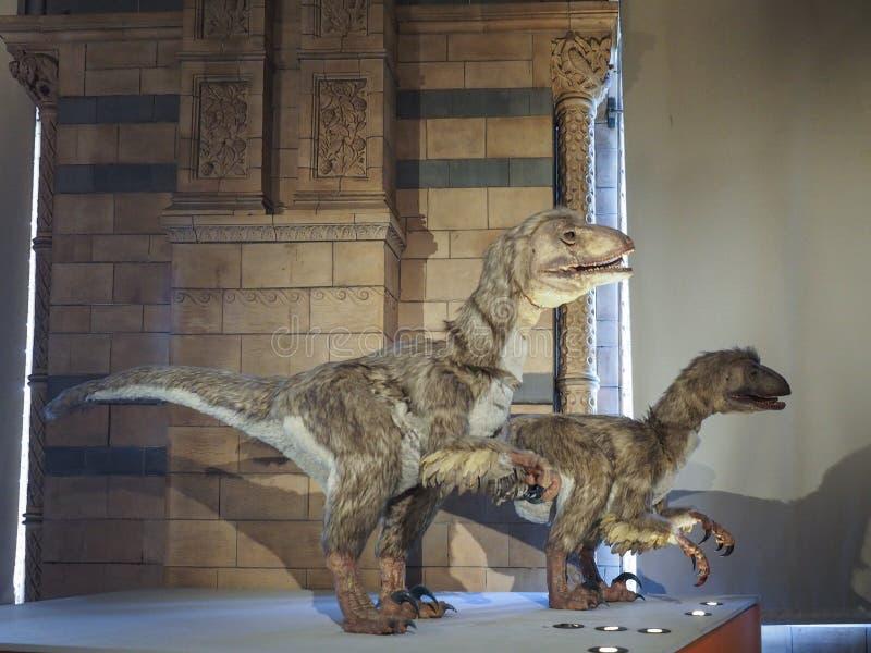 μουσείο του Λονδίνου ιστορίας φυσικό στοκ φωτογραφίες με δικαίωμα ελεύθερης χρήσης