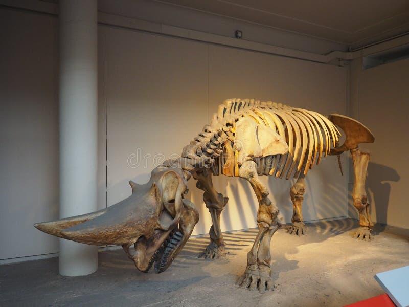 μουσείο του Λονδίνου ιστορίας φυσικό στοκ εικόνα με δικαίωμα ελεύθερης χρήσης