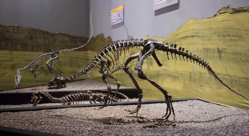 Μουσείο των φυσικών επιστημών σε Ischigualasto στοκ φωτογραφίες με δικαίωμα ελεύθερης χρήσης