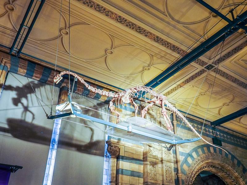 Μουσείο φυσικής ιστορίας στο Λονδίνο (hdr) στοκ εικόνες με δικαίωμα ελεύθερης χρήσης