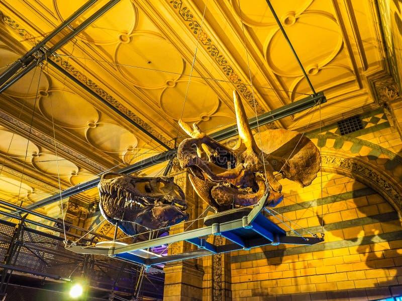 Μουσείο φυσικής ιστορίας στο Λονδίνο, hdr στοκ εικόνα με δικαίωμα ελεύθερης χρήσης
