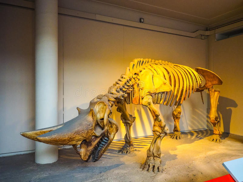 Μουσείο φυσικής ιστορίας στο Λονδίνο (hdr) στοκ φωτογραφίες με δικαίωμα ελεύθερης χρήσης