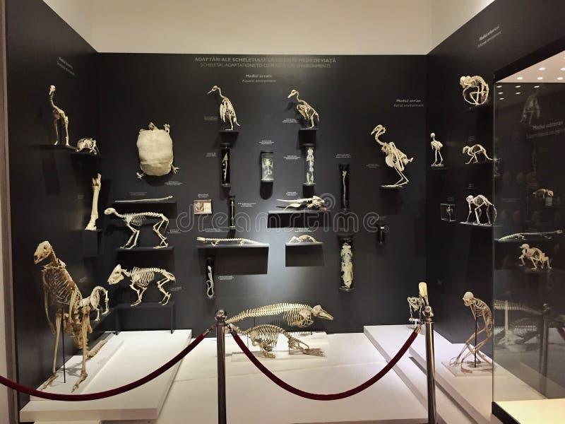 Μουσείο φυσικής ιστορίας Antipa Grigore στοκ φωτογραφία με δικαίωμα ελεύθερης χρήσης