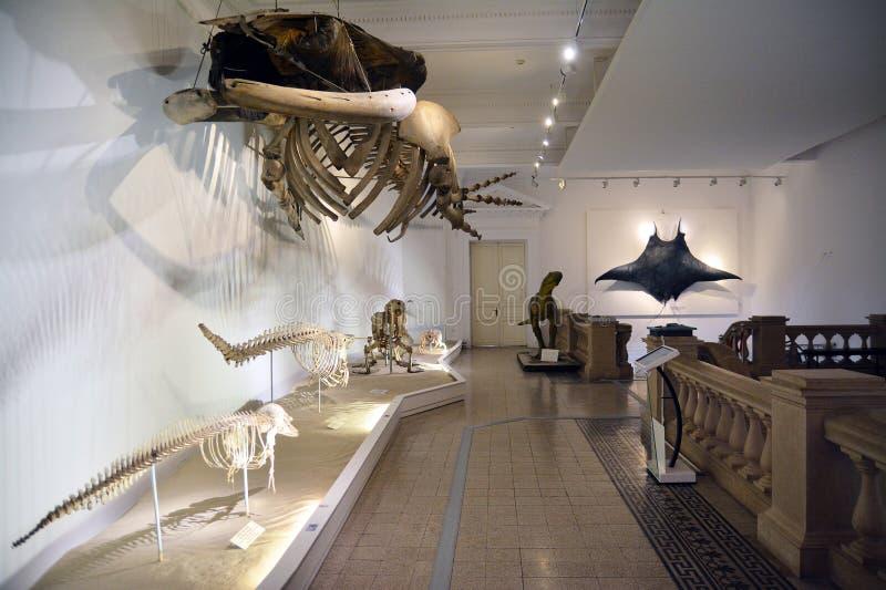 μουσείο στοκ εικόνες