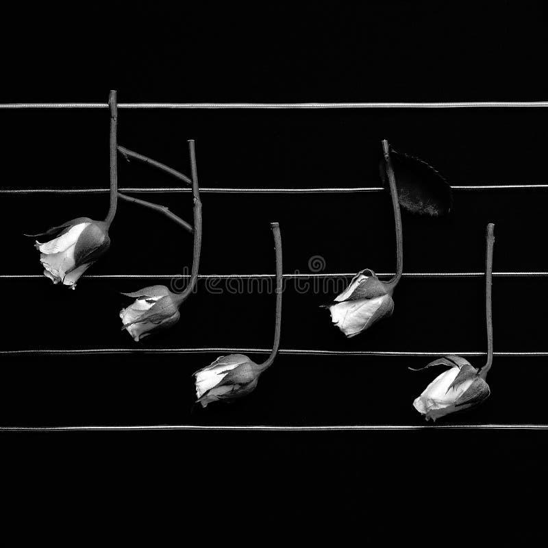 μουσικές νότες ροδοει&delt στοκ φωτογραφία με δικαίωμα ελεύθερης χρήσης