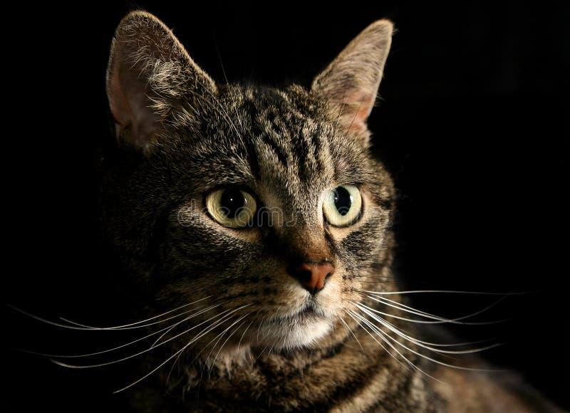 μουστάκια γατών στοκ φωτογραφίες με δικαίωμα ελεύθερης χρήσης