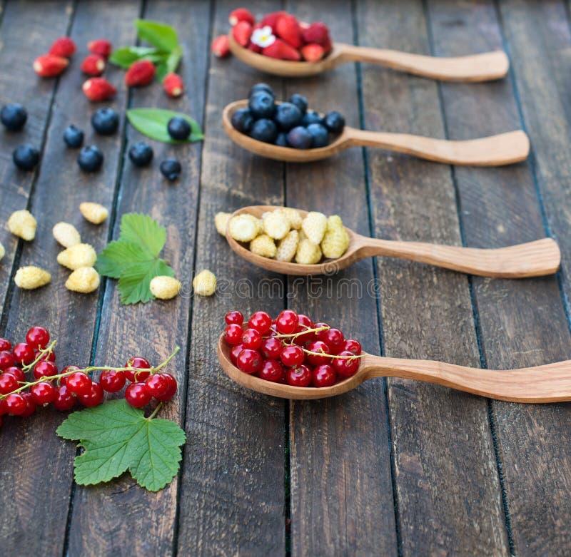 Μούρα στα ξύλινα κουτάλια σε μια σειρά στο ξύλινο υπόβαθρο Κολάζ των διαφορετικών μούρων Άγρια κόκκινη και κίτρινη φράουλα, βακκί στοκ εικόνα